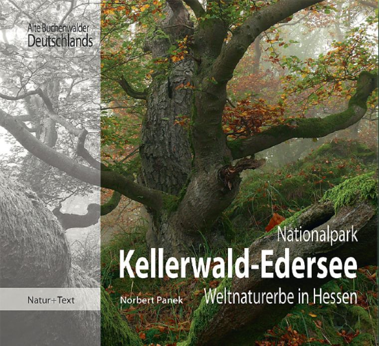 nationalparkzentrum kellerwald nationalpark kellerwald edersee weltnaturerbe in hessen. Black Bedroom Furniture Sets. Home Design Ideas