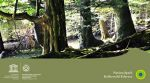 World Heritage - Ancient Beech Forests of Germany Beschrijving afbeelding: World Heritage - Ancient Beech Forests of Germany